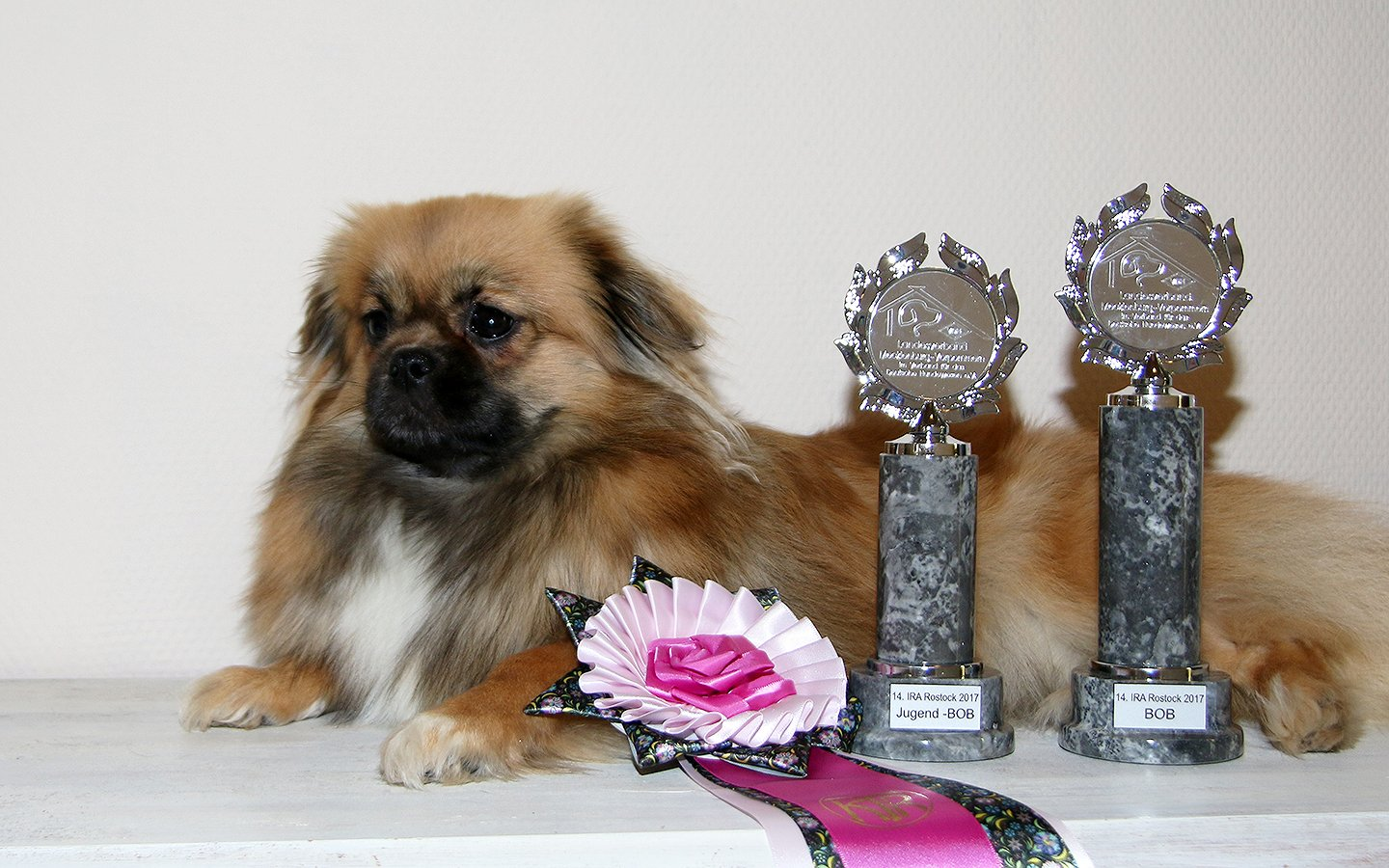 CACIB Rostock 2017 - Rostock Jugendsieger 2017 - BEST OF BREED
